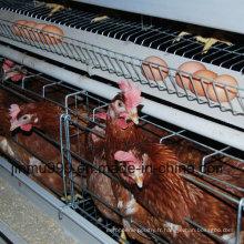 Cage de poulet automatique d'équipement de volaille