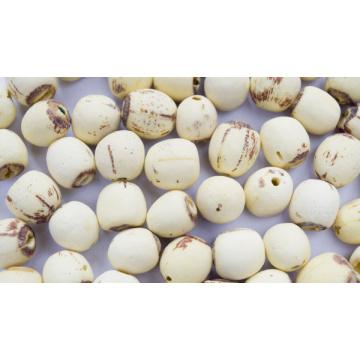 Органическое семя лотоса навалом, семя лотоса без ядра