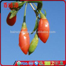 Goji-Produkt Goji Beeren Goji-Beere wird Anti-Falten-Essen