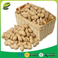 Amendoim cru de China com casca
