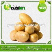 2016 New Mature Fresh Potatoes Low Price