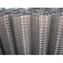 Galvanized Iron Welded Wire Mesh