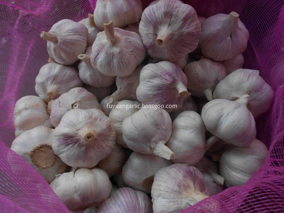 Normal White Garlic 46