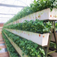 Hydroponic U-type Strawberry Growing Trough System