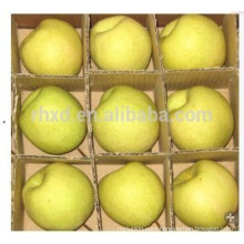 Dangshan su pear/Chinese sweet pear/Shaanxi Gong pear