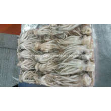 Frozen Illex Squid Tentacle and Squid Head for Sale