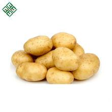 Batata de legumes frescos de Bangladesh / Batata fresca de nova safra