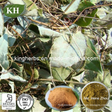 Male Sexual Health Protect 10%, 20% HPLC Epimedium Extract,