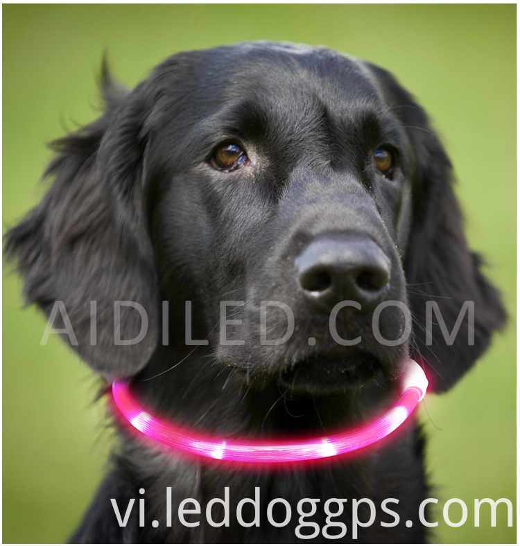 Christmas Light Up Dog Collar