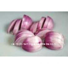 fresh red onion exporter