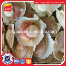 Vente chaude nouvelle culture demi-coquilles congelées Shell Shell sur
