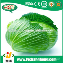 [Hot Sale] Fresh Cabbage/green Cabbage