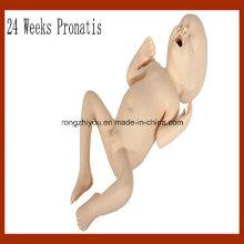 Vivid Medical Nurning Model 24 semanas Pronatis