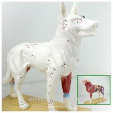 MODELO VETERINARIO AL POR MAYOR 12005 Anaimal Modelo anatómico Modelo de acupuntura para perros