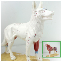 VETERINÁRIO POR ATACADO MODELO 12005 Modelos Anatômicos Anaimal Modelo de acupuntura canina