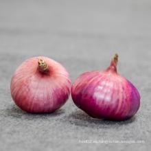 Exportadores precios frescos del mercado cebolla roja para importadores
