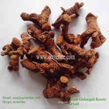 new crop air dried galangal root spice herb