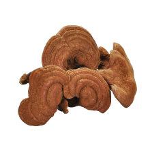 China factory top quality reishi mushroom ganoderma lucidum karst for sale