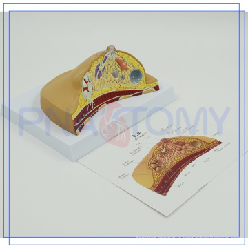 PNT-0741 Customized artifical breast for school wall decoration