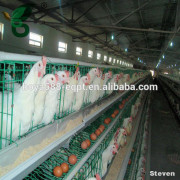 Supply hot sale used chicken farm poultry equipment / automatic chicken layer cage for sale in philippines