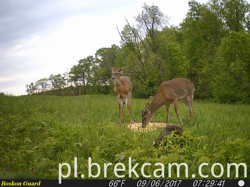 deer trail camera