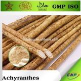 100% pure nature achyranthes bidentata extract powder
