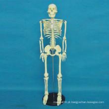 Modelo de corpo de esqueleto humano de alta qualidade para o ensino médico (R020103)