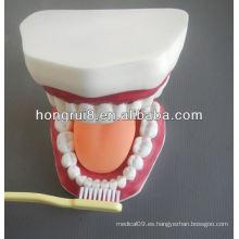Nuevo modelo de cuidado médico dental modelo, modelo de dientes dentales con lengua