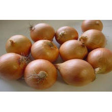Round Golden Natural Fresh Onion For Mexican Cuisine Contai