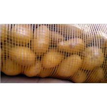 Новый урожай картофеля для рынка Бангладеш