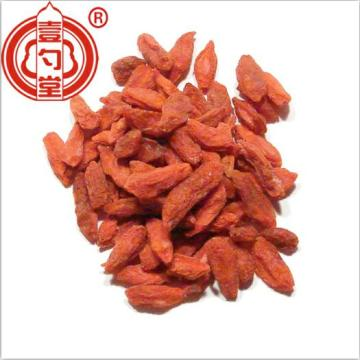 Superfruit Goji Berries frutto di lycium