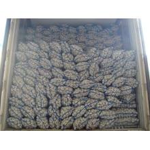 Профессиональный экспорт нового урожая 5,0 см и выше Нормальный белый чеснок