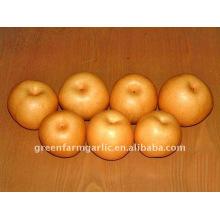 Shandong Laiyang Fengshui pear in China