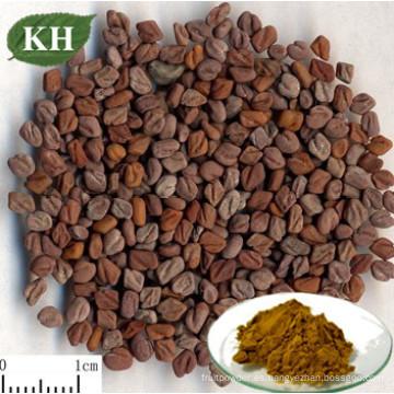 Extracto de semilla de fenogreco al 50% Fenogreco natural Saponinas