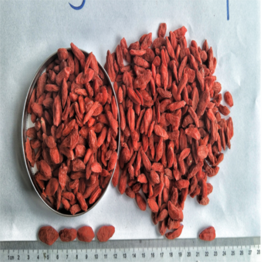 Certified Hot sale Dried Organic Red Goji berry / wolfberry