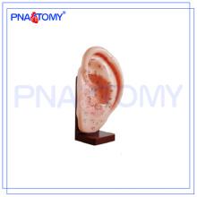 Modelo anatômico de acupuntura auricular PNT-AM24