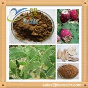 Natural Herb Hoodia gordonii cactus extract powder Antibacterial and anti-inflammatory