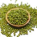 2012 nueva cosecha pequeña verde frijol mungo para brotación con precio más barato