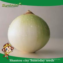 Suntoday vegetais F1 jardim Orgânico compra on-line sementes de cebola roxa vermelha longa prateleira fornecedor (81003)