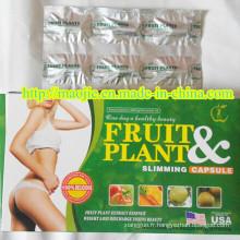 Fruits sans danger et plante Slim Diet Pills (MJ-FP99)