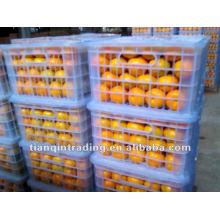 Beste Qualität Nabel Orange