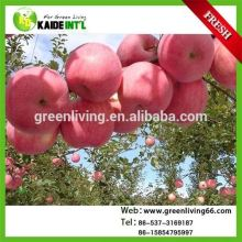 Red Fuji Apple With Low Price And High Quality