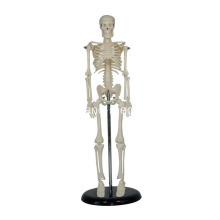 I-45CM Mini Skeleton