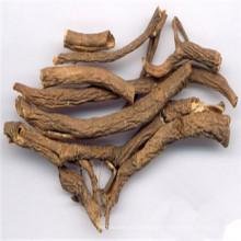 Sibirischer Ginsengwurzel