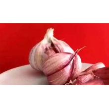 Свежий красный / нормальный белый чеснок высокого качества
