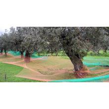 Couleurs variées Olive Harvest Nets