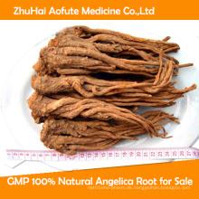 GMP 100% natürliche Angelica Wurzel zum Verkauf