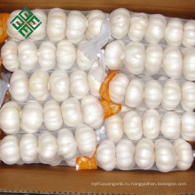 свежий чисто белый чеснок с картонной упаковки