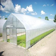 Single Span tunnel greenhouse for plant vegetable