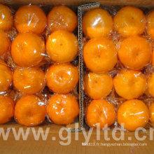 Nouvelle culture de haute qualité de mandarine orange